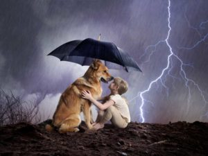Hurricane and Storm Pet Tips