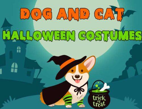 5 Pawsome Dog & Cat Halloween Costumes