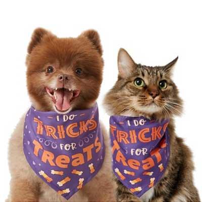 I do tricks for treats Dog Cat Halloween Costume