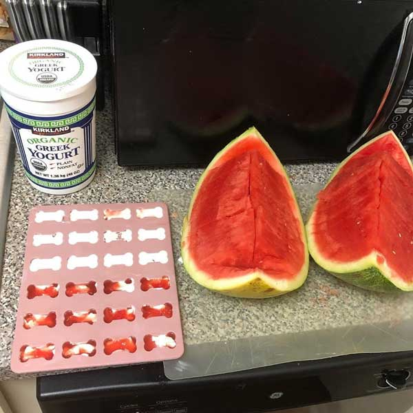 Watermelon Greek Yogurt Pupsicles