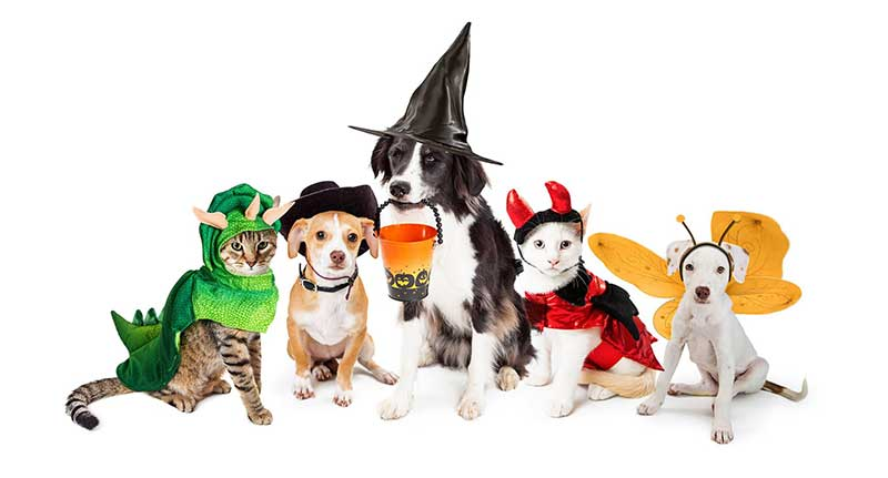 HOWL-o-ween Boo Bash and Adoption Event!
