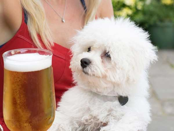 small white dog and beer