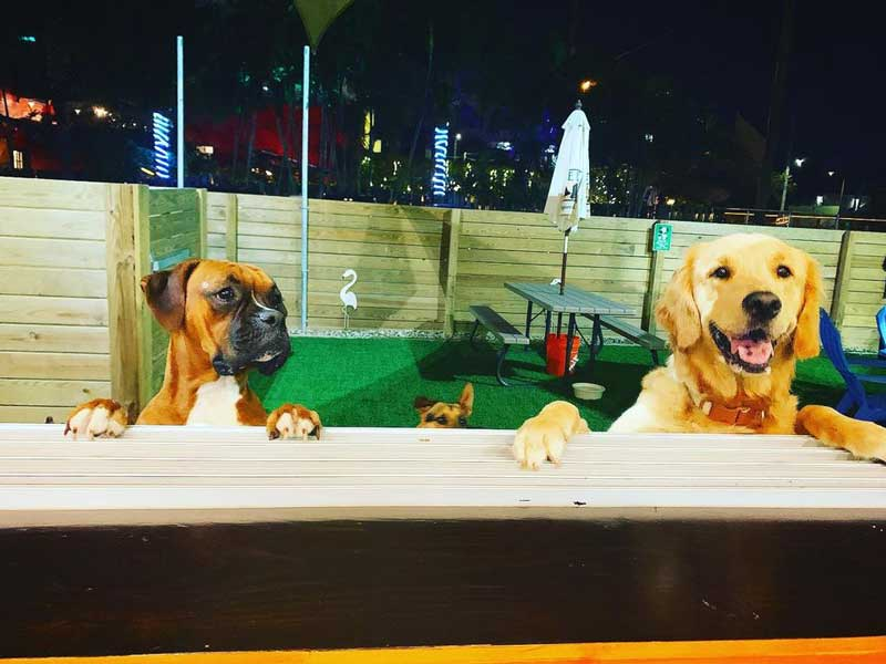 Indoor Dog Park -All Day Happy Hour