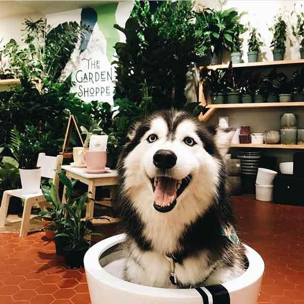 Plants & Pups